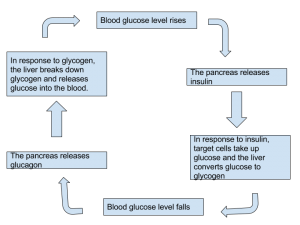 Homeostasis-Controlling-blood-sugar-levels