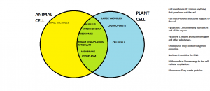 Plant and cell structure